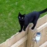 足場の悪いフェンスの上をユニークな方法で歩く猫(笑)