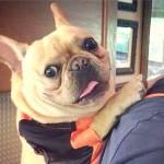 ニューヨークの地下鉄、バッグに収まらない大型犬の車内持込を禁止した結果(笑)
