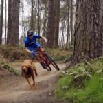 マウンテンバイクに乗った飼い主とダウンヒルを全力疾走するハンガリアンビズラ犬がスゴイ!
