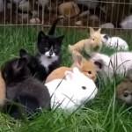 子ウサギたちと仲良く戯れる子猫たちの可愛くて微笑ましい光景