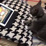 チュートリアルビデオを観ながら、生地のこね方を熱心に学ぶ猫(笑)