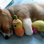 ぬいぐるみを抱きしめてお昼寝をする動物たちの可愛い写真集 24選