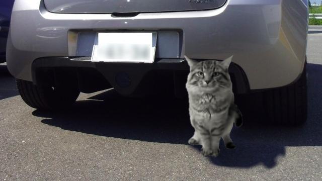 会社の敷地内をうろつく野良猫を「社長」と呼んでいたら、大変なことに・・・