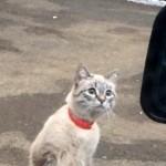 着ぐるみを着た人間としか思えない猫が目撃される(笑)