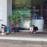 ペットショップに毎日ひとりで買い物にやって来る賢いワンちゃん