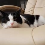 20日間留守をしていた飼い主が帰宅・・・気になる猫の反応は?