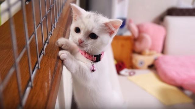 ご飯の支度を始めると、ミャーミャーとご飯の催促をし続ける子猫ちゃん