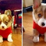 子犬から成犬へ → ワンコのビフォー・アフター写真集その2 20枚