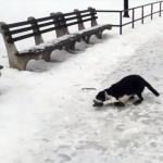 滑って転んだ愛犬を笑っていたら、同じ災いを受けることになった飼い主