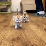 覚束ない足取りで駆け寄ってくる3匹の子猫たち・・・可愛さ全開!