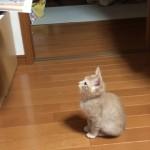 プリンターに興味津々な猫。排出される用紙をじっと見ていると予想外のことが・・・