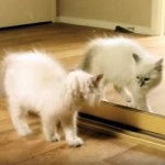 鏡に映った自分の姿にビビりまくる子猫たち(笑)