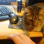 飼い主にパソコンを使わせない猫 → 嫌がらせ、それとも構ってちゃん?