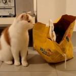 同居猫が入った紙袋に猫パンチを喰らわしておいて、しらばっくれる猫(笑)