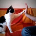 猫にいろんな芸を教える飼い主と猫の微笑ましいトレーニング風景
