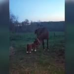 子馬のぬいぐるみをそばに置いたところ、馬の反応が予想外だった!