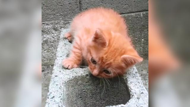 コンクリートブロックの上で遊ぶ子猫・・・やっぱりそう来たか(笑)