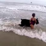 自分の体を盾にして女の子を波から守ろうとするワンコ