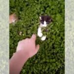 顔を出したり引っ込めたり・・・植木の中で隠れん坊をする子猫たちが可愛い!