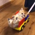 おもちゃのダンプカーにすっぽりと収まったかわいい子猫