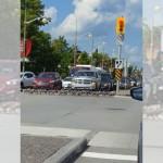 交通ルールを守り、青信号で横断歩道を渡るガチョウの群れ