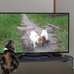 どうなってるの!?・・・テレビを観ている猫もびっくりする不思議な出来事