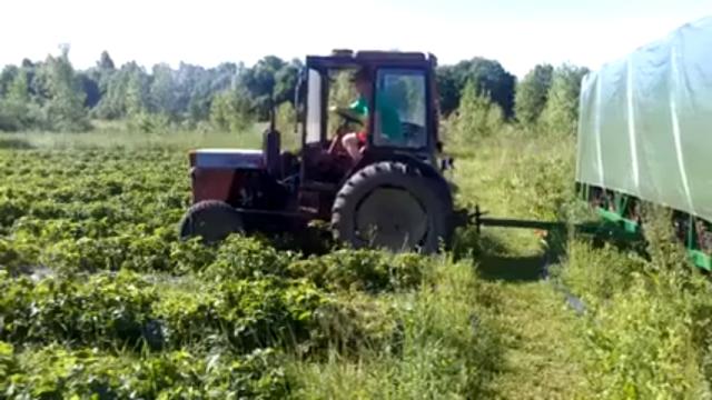 超画期的なイチゴの収穫用トラクターの登場!・・・安上がりで効率的だと話題に(笑)