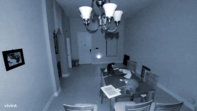真夜中に防犯用警報器を作動させる人騒がせな猫(笑)