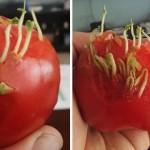 うっかり放置した結果、発芽して恐ろしいまでに成長した野菜や果物いろいろ 18枚