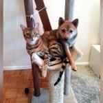 どう見ても猫っぽい!?・・・行動パターンが猫と同化してしまったワンコの写真いろいろ 25枚