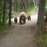 ハイキングをしていて恐ろしいクマの親子と遭遇してしまったハイカー