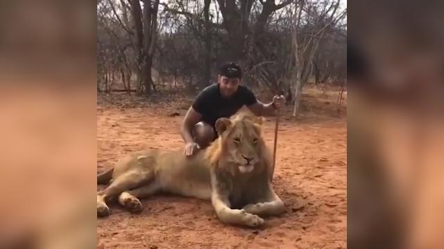 ライオンを撫でていたら、突然くしゃみをされて凍りつく男性(笑)