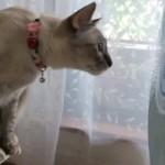 扇風機に貼ってあるシールをとらえようと一生懸命な猫(笑)
