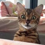 見てはいけないものを見てしまった子猫の行動がおもしろ可愛い!