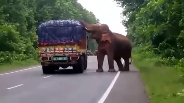 野生のゾウと遭遇!?・・・トラックの荷台からジャガイモを盗まれる珍事が発生