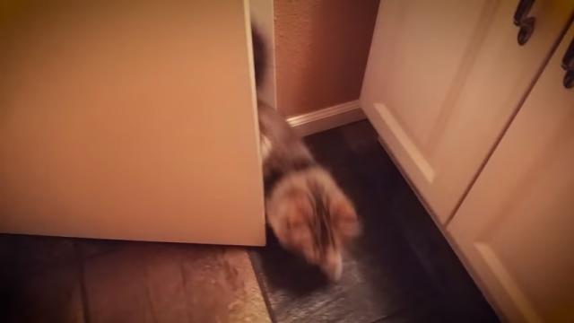 毎朝、トイレにこもる飼い主の元へやって来ては至福のひと時を過ごす猫(笑)