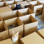ダンボール50箱で猫用迷路を作成 → 果たして愛猫の反応は・・・