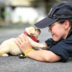 警察犬の候補生として新しく仲間入りした犬の赤ちゃんが可愛すぎる♡ 10枚