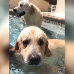 飼い主のすることは何でも真似しちゃう愛犬。プールではこんなことも・・・