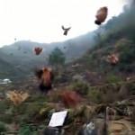 ホイッスルを吹くと飛んでやって来る数百羽のニワトリの凄まじい光景