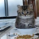 どんな場所でもスッポリ収まる液体化したような猫たち 30選