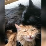 毛づくろいをされる猫、表情に突然の異変が・・・一体何があった!?