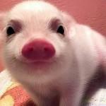 微笑を浮かべた可愛い動物たちの写真その2 30選