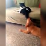 ちょっかいを出すワンコに高速連続猫パンチを喰らわせるニャンコ(笑)
