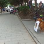 お店の看板を咥えて通行人にアピールする看板犬が賢くてカワイイ!