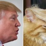 有名人と何処となく雰囲気が似ている猫たちの写真 18枚