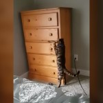 「かくれんぼ」をする猫の隠れ方が完璧すぎて笑える