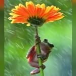 花やキノコを傘にして雨宿りする動物たちのメルヘンチックな写真 20枚