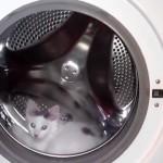 衣類乾燥機のドラムを回転させて遊ぶハムスターのような子猫