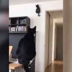 自分そっくりな壁掛け時計と動きが同調する黒猫がおもしろい